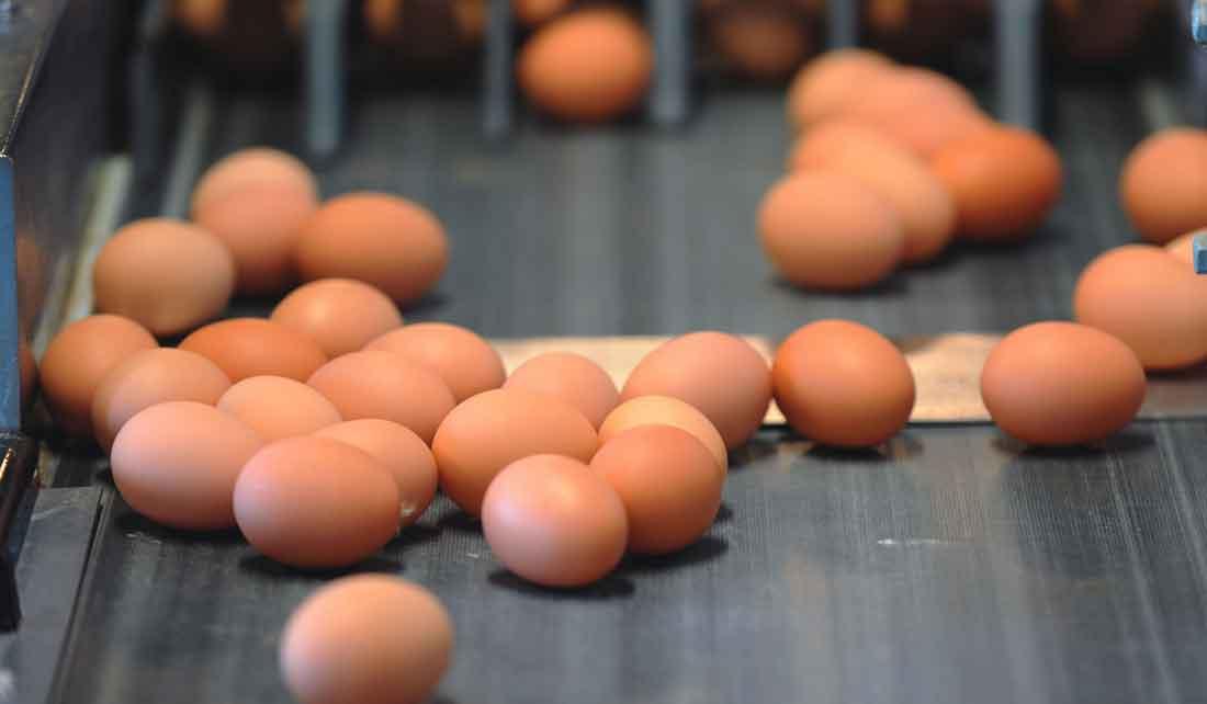 کانوایر-حمل-تخم-مرغ