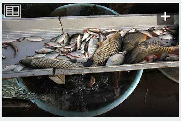 کانوایر حمل وانقال ماهی
