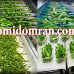 نوارنقاله شستشوی سبزیجات